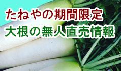 daikon_banner2016.jpg