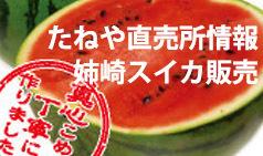 たねや直売所情報スイカ販売.jpg